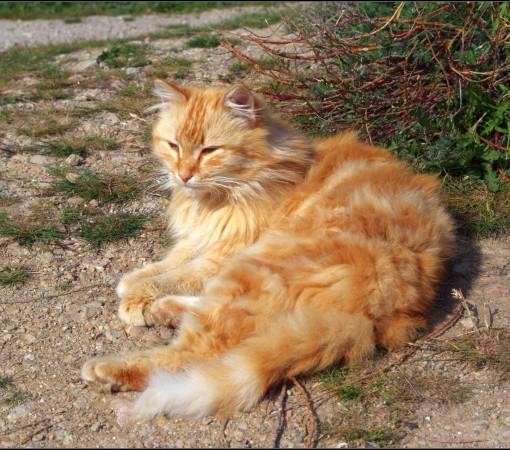 Кот №1 – Нигилист