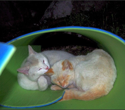 Коты №2 и 3 – Общительные