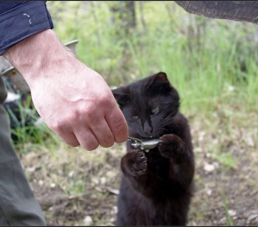 Кот №4 – Аристократ